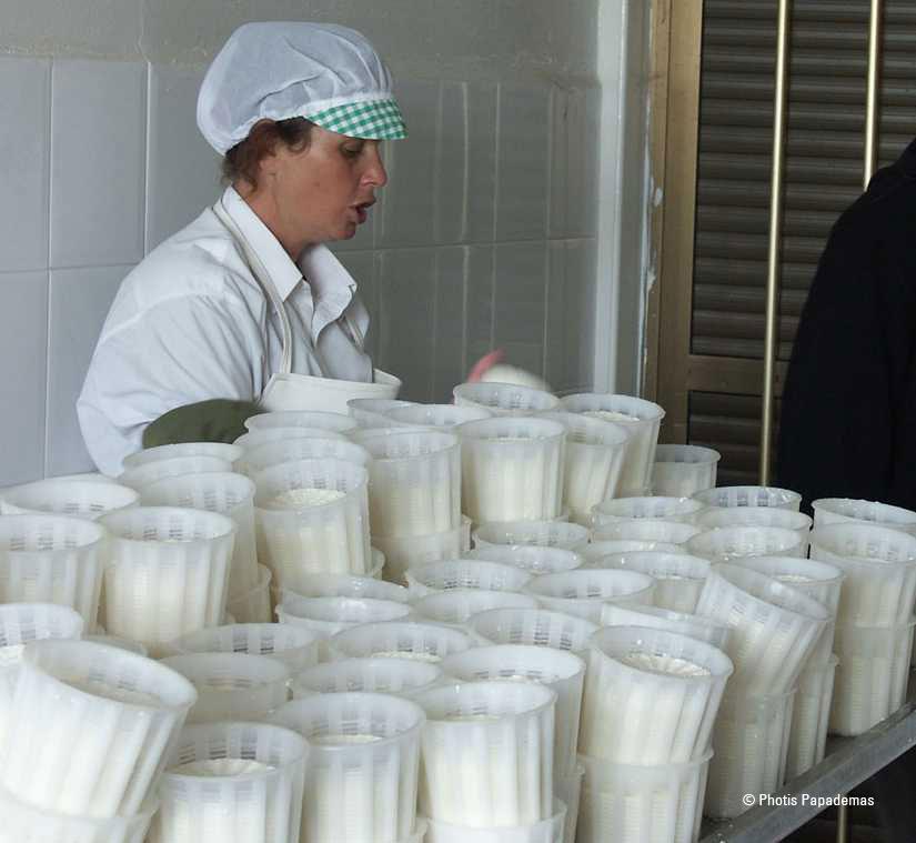 Käseproduktion lebensmittelhygienisch korrekt