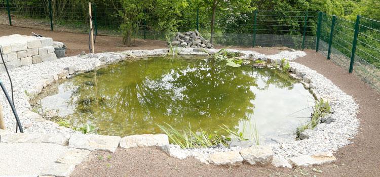 Der neu angelegte Teich im Biotopgarten.