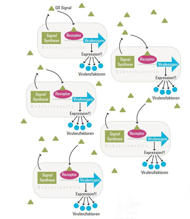 bode-grafik2