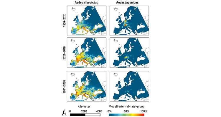 Durch den Klimawandel wird sich das potenzielle Verbreitungsgebiet Wärme liebender Arten ausdehnen. Entscheidend sind dabei die unterschiedlichen Ansprüche an abiotische (unbelebte) Umweltbedingungen. Modellierte Habitateignung für »Aedes albopictus« und »Aedes japonicus« unter aktuellen (mittlere Bedingungen zwischen 1950 und 2000) und zukünftigen Klimabedingungen (für den Zeitraum 2021 bis 2040 und 2041 bis 2060 nach dem 8.5 RCP IPCC-Szenario): Warme Farben stehen für eine hohe modellierte Habitateignung, kalte Farben für eine niedrige modellierte Habitateignung. Grafik: AG Klimpel