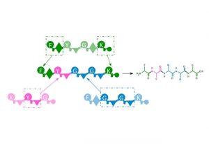 """Schematische Darstellung des """"Baukastensystems"""" der NRPS Enzyme zur Produktion neuer Wirkstoffe. Fragmente aus natürlichen Systemen (grün, magenta, blau) werden neu zusammengesetzt (Mitte) und erzeugen dann einen Naturstoff, der in der Natur so bisher nicht gebildet wurde (rechts)."""