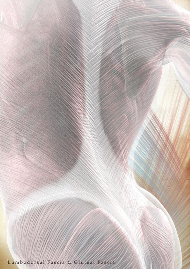 erfreut anatomie der faszien zeitgen ssisch menschliche anatomie bilder. Black Bedroom Furniture Sets. Home Design Ideas