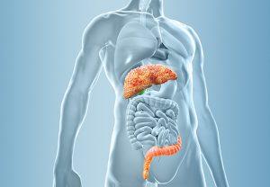 Um die Albumin-Therapie bei dekompensierter Leberzirrhose gezielt steuern zu können, will Prof. Jonel Trebicka im Projekt Microb-Predict künftig nach Albumin-Markern im Darmmikrobium suchen.