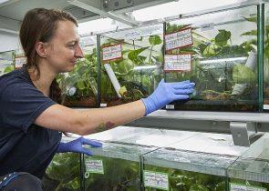 Suche den Frosch: Tierpflege plus Forschung hat Denise Werner zur Berufswahl motiviert. (Foto: Jürgen Lecher)