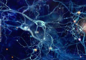 Wie Nervensysteme einen stabilen inneren Zustand erhalten können, erforschen Wissenschaftler im SFB 1080.