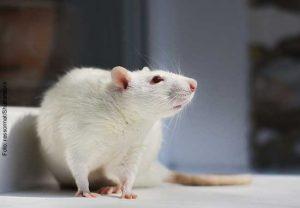 Wie in toxikologischen Untersuchungen auf Gewebe etwa von Ratten verzichtet werden kann, untersucht das Projekt CRACK-IT unter Federführung der Goethe-Universität