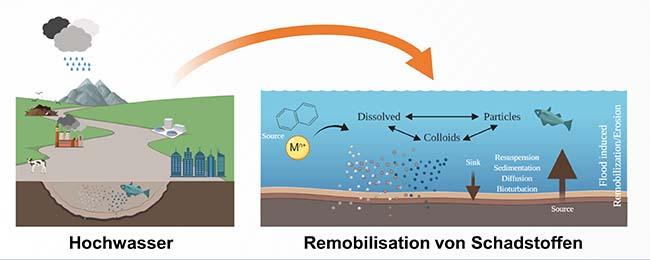 A remobilização de poluentes de sedimentos durante inundações severas é uma consequência até agora subestimada de eventos extremos